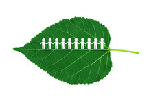 Ecology Concept : Group Of People Figure Icon Standing On Green Mulberry Leaves. They Holding Hands Together.