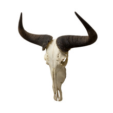 Wildebeest Skull And Horns Isolated On A White Background