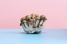 Fresh Raw Edible Mushroom Still Life On Blue An Pink Background