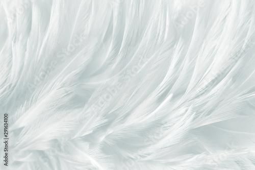 Canvastavla  white feathers line texture background