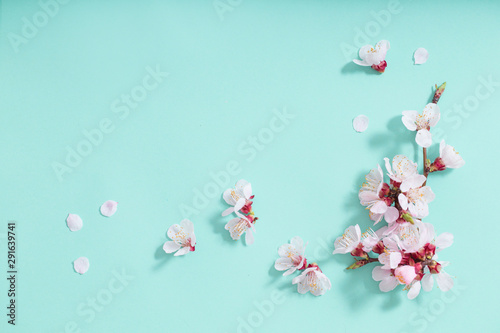 pink cherry flowers on green background