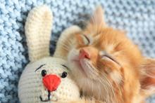 Sleeping Cute Little Kitten Wi...