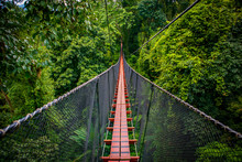 The Tree Top Walk At Doi Tung, Chiang Rai Province, Thailand.