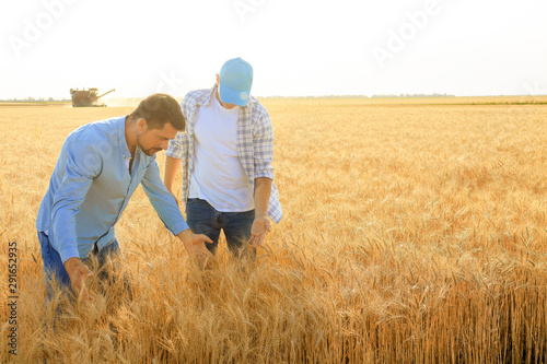 Obraz Male farmers working in wheat field - fototapety do salonu