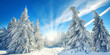 Leinwandbild Motiv magischer Winterwald