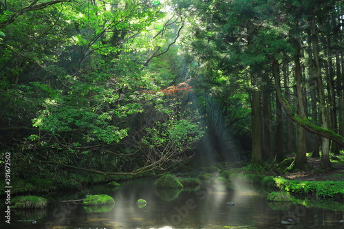 Wall Murals Forest river 夏の元滝伏流水