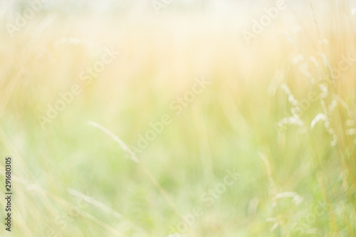 Blurred background. Summer background. Blurred meadow, flowers, plants, herbs. Natural background. - 291680305
