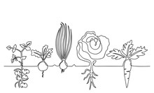 Family Of Vegetables Growing In A Garden On A Garden, Hand-drawn In One Line