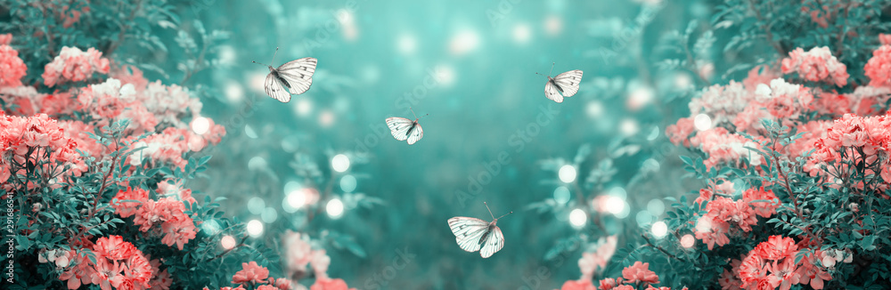 Fototapeta Mysterious fairytale spring or summer fantasy floral banner with blooming rose flowers and flying butterflies on blurred beautiful background toned in soft pastel colors and shiny glowing bokeh