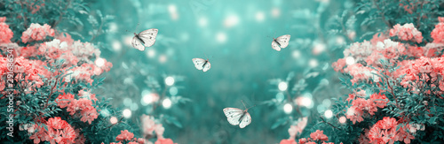 Fototapety, obrazy: Mysterious fairytale spring or summer fantasy floral banner with blooming rose flowers and flying butterflies on blurred beautiful background toned in soft pastel colors and shiny glowing bokeh