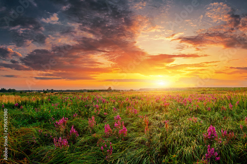 Summer field full of grass and flowers, sun set sky above. Beautiful sunset landscape.