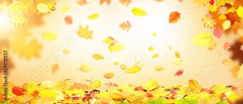 Poster Ecole de Danse Goldener Herbst