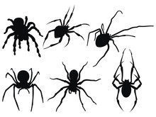 Set Of Spiders. Collection Of ...