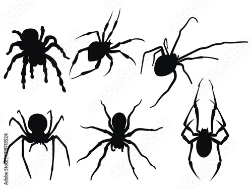 Photo Set of spiders