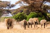 Fototapeta Sawanna - African elephants in Amboseli National Park. Kenya, Africa.