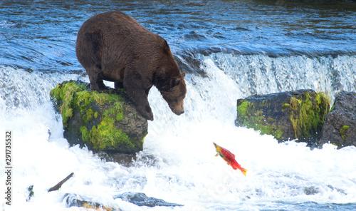 Fotomural Grizly Bear at Alaska