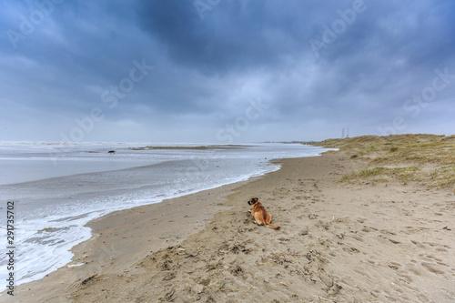 Papel de parede Severe storm along Dutch North Sea coast put Beach to the dunes under water agai