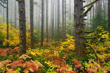 Fall Colors During Autumn In S...