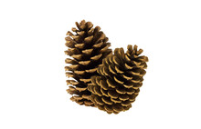 Two Pine Cones On White Background