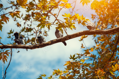 group of pigeons standing on a tree branch