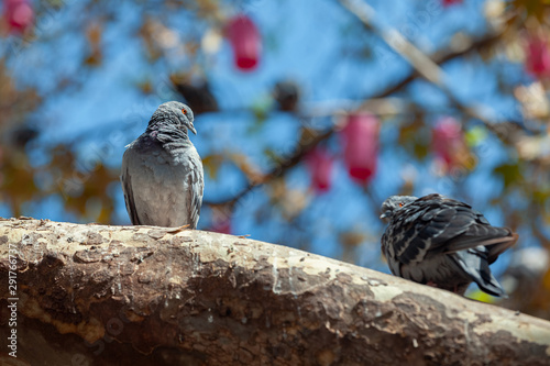 two pigeon standing on a tree branch in park
