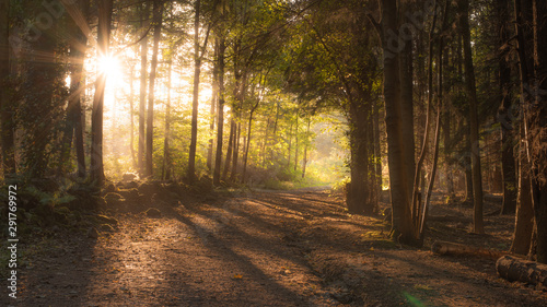Fototapety, obrazy: Autumnal forest at sunset