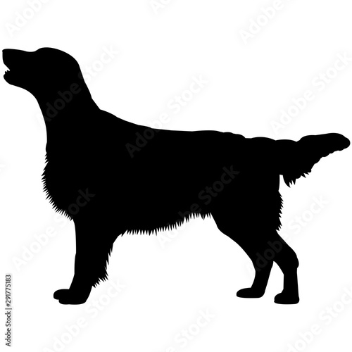 Flat-Coated Retriever  Silhouette Vector Fototapeta