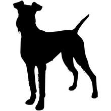 Irish Terrier  Silhouette Vector