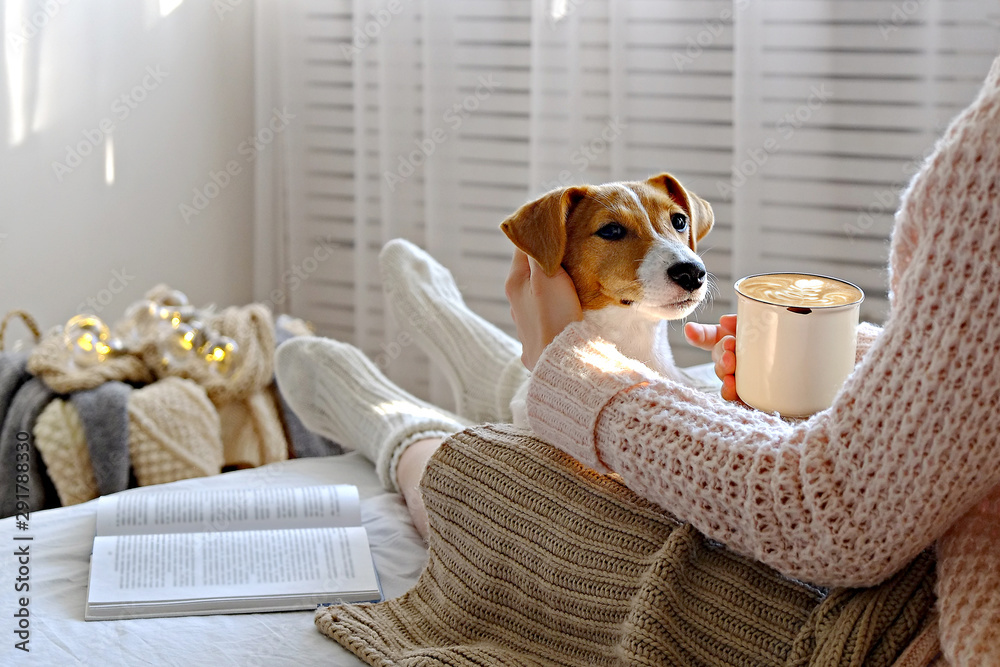 Fototapety, obrazy: Young woman and her adorable jack russell terrier puppy sitting on couch cozied up, covered with blanket. Lazy afternoon at home with loved pet concept. Close up, copy space, interior background.