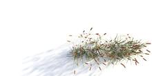 Grass Verde