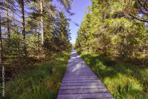 Fotomural  Wooden footpath, hiking trail, nature reserve Wildseemoor, Kaltenbronn, Gernsbac