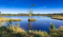 Raised Bog Of The Wildsee At K...