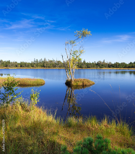 Fotografía Raised bog of the Wildsee at Kaltenbronn, Northern Black Forest, Germany, with birch trees and small pines, territory Bad Wildbad and Gernsbach
