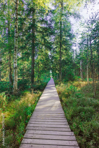 Fotografía Wooden footpath, hiking trail, nature reserve Wildseemoor, Kaltenbronn, Gernsbac