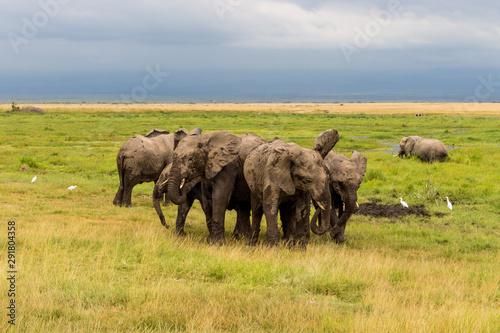 Wild animals in Kenya, Africa Canvas Print