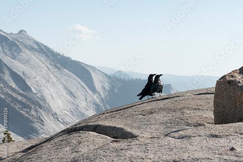 Photo 2 Crows enjoying View on Yosemite NP