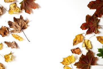 Jesienne kolorowe liście na białym tle z miejscem na tekst