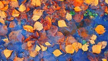 Colourful Fall Leaves In Pond Lake Water, Floating Autumn Leaf. Fall Season Leaves In Rain Puddle. Sunny Autumn Day Foliage. October Weather, November Nature Background. Beautiful Reflection In Water.