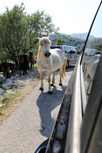 White Horse Standing By The Side Of Car