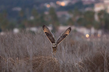 Owl Liftoff