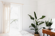 Textured Green Plants In Bright Mid Century Room