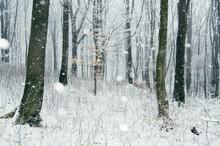 Snow Flakes Falling In Winter Wonderland Woods