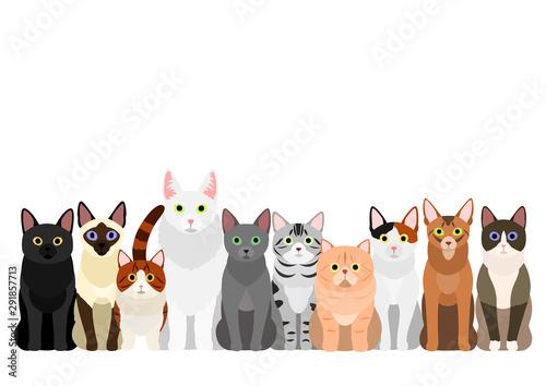group of  various cats Tableau sur Toile
