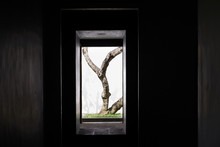 The Tree Trunks Of The Courtyard Are Seen Through The Black Walls And Windows. A Special Perspective In Sri Lanka