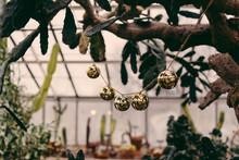 Sleigh Bells In A Botanical Garden