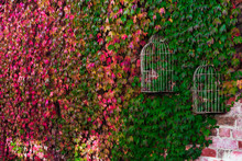 Vines Growing On Wall