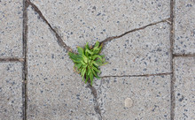 Green Grass Growing In Crack Of Tile On Road