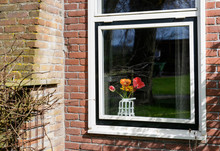 Colorful Tulip Flowers In White Window In Brick Wall House