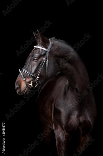 Fototapety, obrazy: Beautiful horse on a dark background