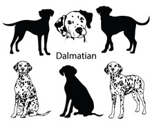 Dalmatian Set. Collection Of Pedigree Dogs. Black White Illustration Of A Dalmatian Dog. Vector Drawing Of A Pet. Tattoo.